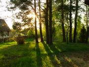Дача в живописном месте. Лес,  река Вилия.